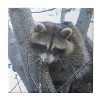 Raccoon Ceramic Tile