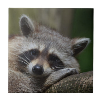 Raccoon Ceramic Tile