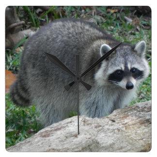 Raccoon Square Wallclock