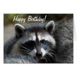 Raccoon Close-Up Card
