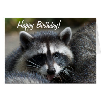 Raccoon Close-Up Card