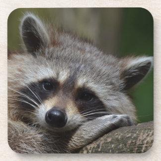 Raccoon Beverage Coasters