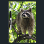"Raccoon Dry-Erase Board<br><div class=""desc"">Raccoon</div>"