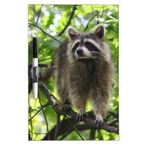 Raccoon Dry-Erase Board