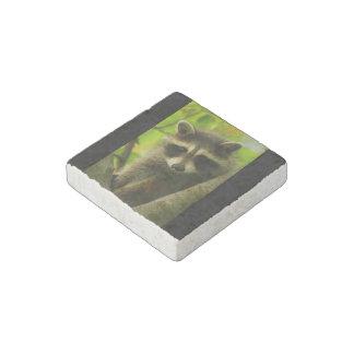 raccoon stone magnet