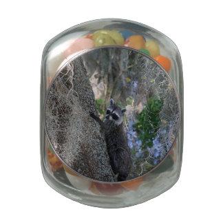 Raccoon Glass Jars