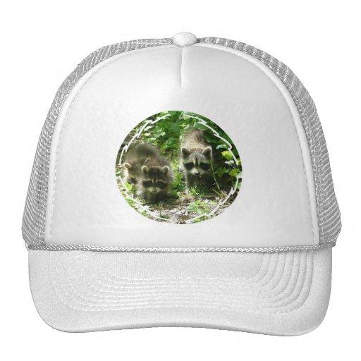 Raccoon Habitat Baseball Hat