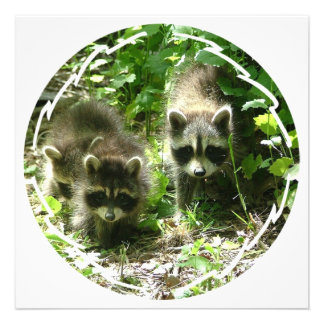 Raccoon Habitat Invitation
