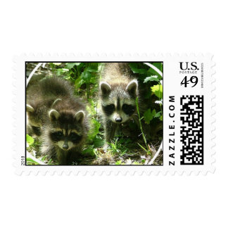 Raccoon Habitat Postage Stamp