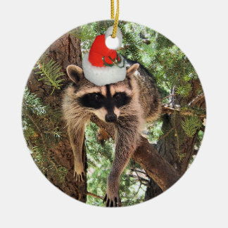 Raccoon hanging in a tree wearing a Santa hat. Ceramic Ornament