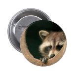 Raccoon hide-and-seek button