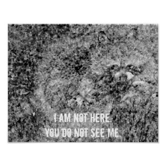 Raccoon I am not here wildlife poster nature