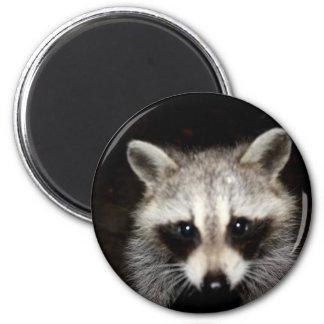 Raccoon I Got my eyes on you Fridge Magnet
