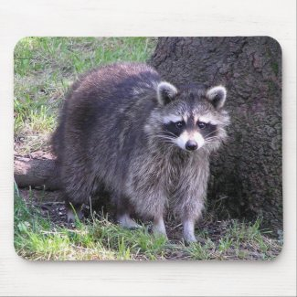 Raccoon in Daylight Mousepad