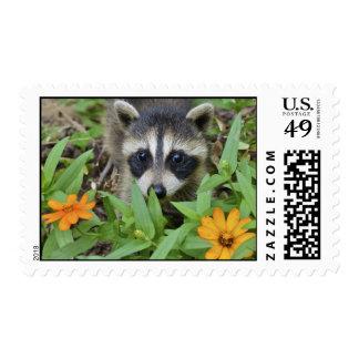 Raccoon in Garden - Postage Stamp