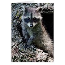Raccoon in the Den