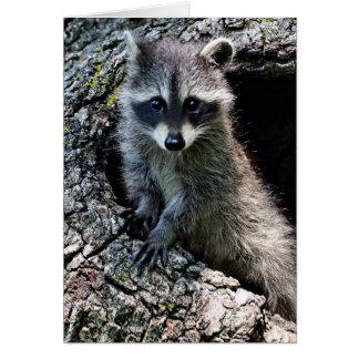 Raccoon in the Den Card