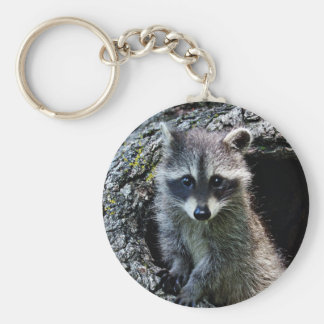 Raccoon in the Den Keychain