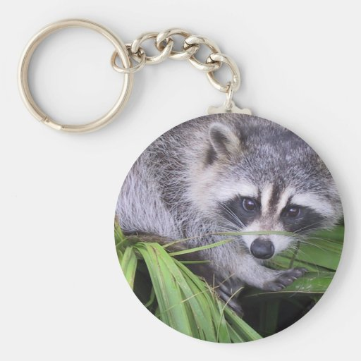 Raccoon In The Plants Basic Round Button Keychain