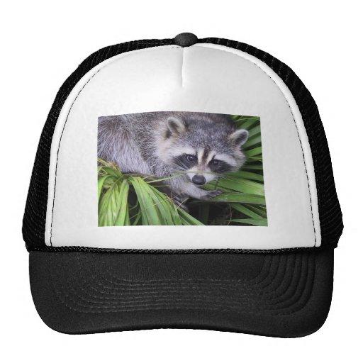 Raccoon In The Plants Hat