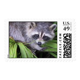 Raccoon In The Plants Stamp