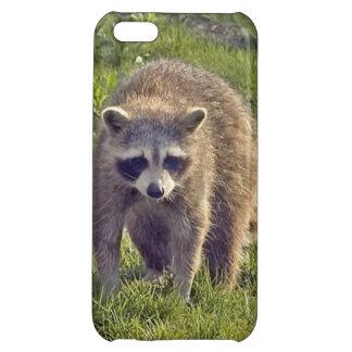 Raccoon iPhone 5C Covers