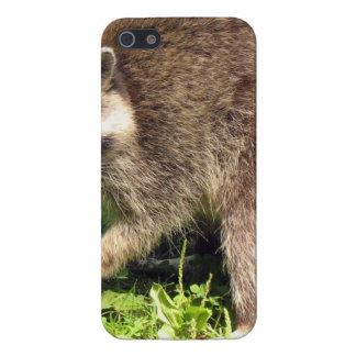 Raccoon iPhone 5 Case