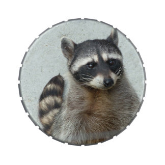 Raccoon Jelly Belly Candy Tin
