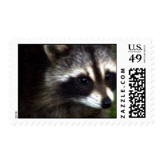 Raccoon Mask  Postage Stamp