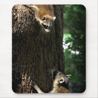 Raccoon Mother and Kit 2 Mouse Pad