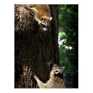 Raccoon Mother and Kit 2 Postcard