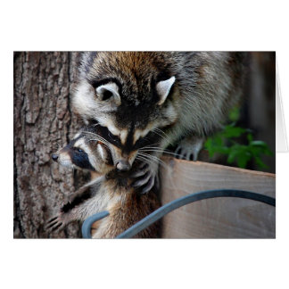 Raccoon Mother and Kit 3 Card
