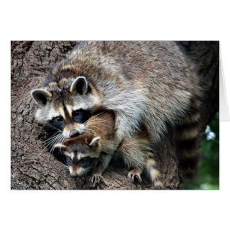 Raccoon Mother and Kit Card
