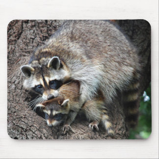 Raccoon Mother and Kit Mouse Pad