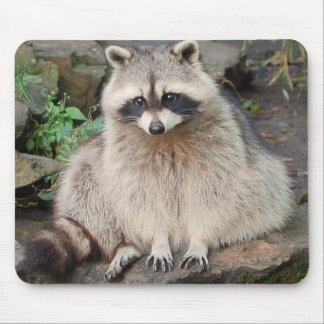 Raccoon Mouse Pad