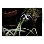Raccoon Mystery Card