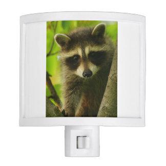 raccoon nite light