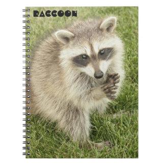Raccoon Spiral Notebooks