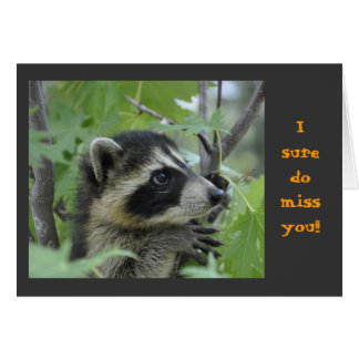 Raccoon - Notecard