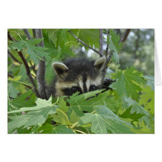 Raccoon - Notecard