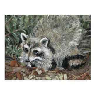 Raccoon Painting on a rock. Postcard