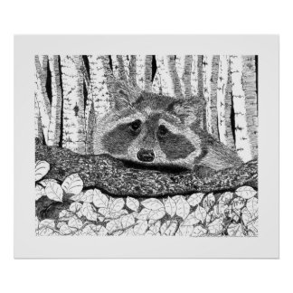 Raccoon Pen and Ink Drawing Poster
