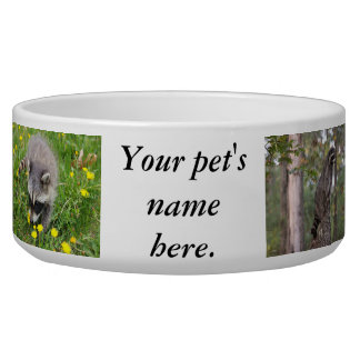 Raccoon pet bowl. bowl