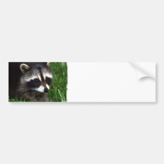 Raccoon Photo Bumper Stickers