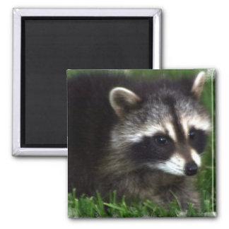 Raccoon Photo Magnet