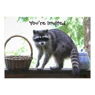 Raccoon Picture Announcement