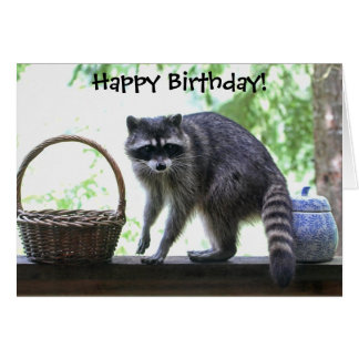 Raccoon Picture Greeting Card
