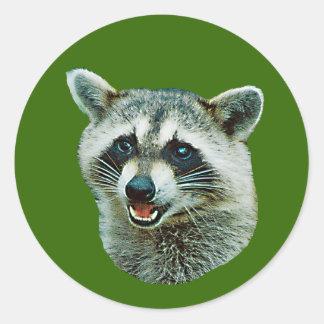 Raccoon Picture Sticker