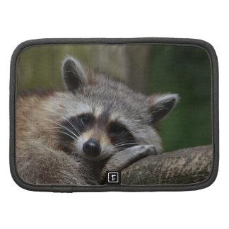Raccoon Organizer