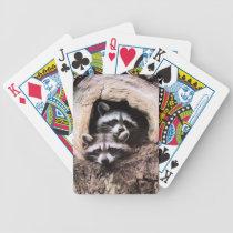 Raccoon Playing Cards
